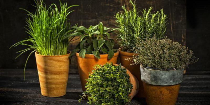 8 трав для удачи, крепкого здоровья и процветания