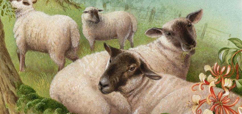 Сказка - притча про паршивую овцу